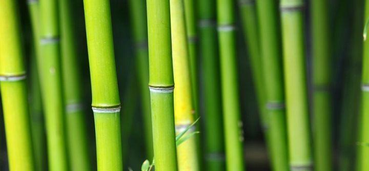 bambus fit an land
