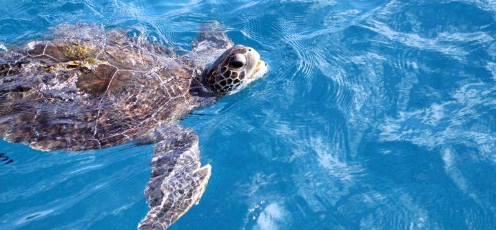 Schwimmen lernen in jedem Alter